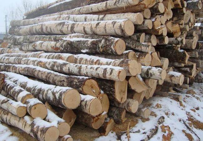 Стопка срубленных деревьев